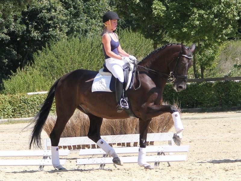 Aktion Pferdestärken 2012